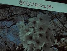 Dai07.JPG